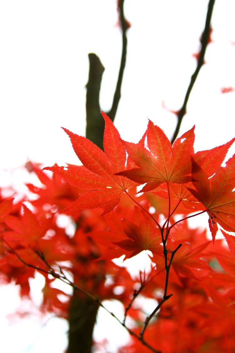 scarlet 2.